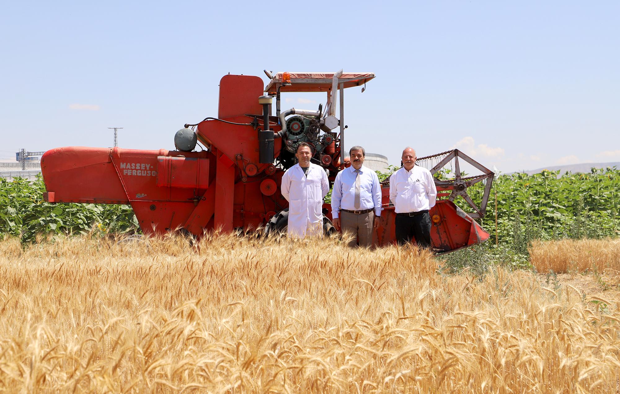 Adaptasyonu Yüksek, Kaliteli Buğday Çeşitleri Sivas Çiftçisine Kazandırılacak